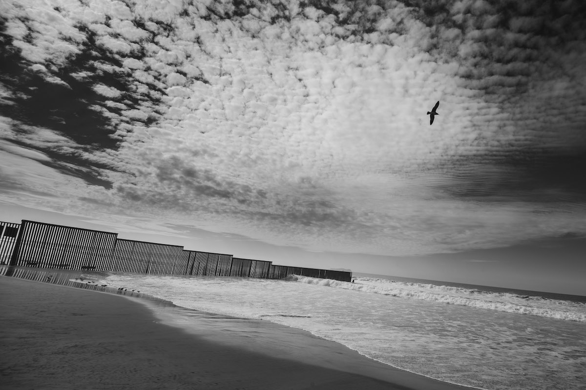 black and white border wall ocean with bird