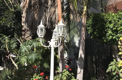 white lamppost in front of palm trees and foliage